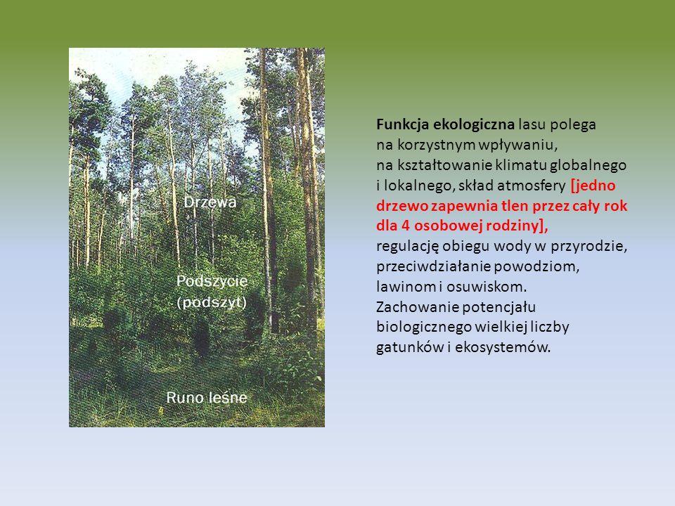 Funkcja ekologiczna lasu polega na korzystnym wpływaniu, na kształtowanie klimatu globalnego i lokalnego, skład atmosfery [jedno drzewo zapewnia tlen przez cały rok dla 4 osobowej rodziny], regulację obiegu wody w przyrodzie, przeciwdziałanie powodziom, lawinom i osuwiskom.